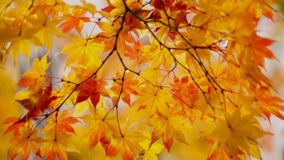 Wie Du den Übergang in den Herbst mühelos hinbekommst (mit Herbst Quick Guide zum Ausdrucken)